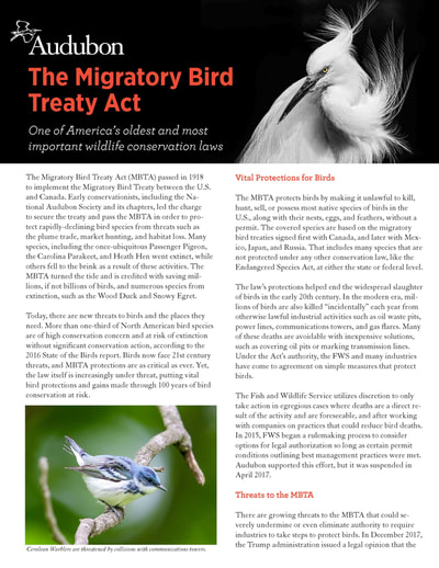 Image: Audubon Migratory Bird Treaty Act Fact Sheet